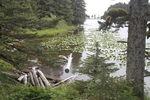 Парк Кадьяка